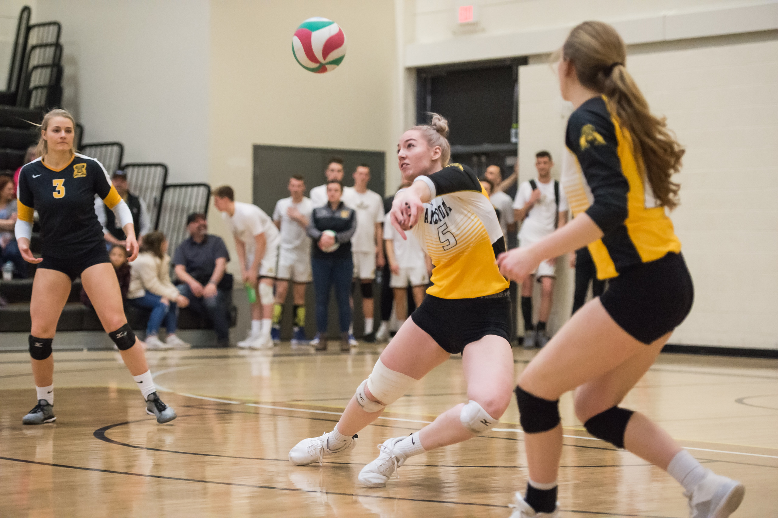 Ambrose Lions Volleyball game