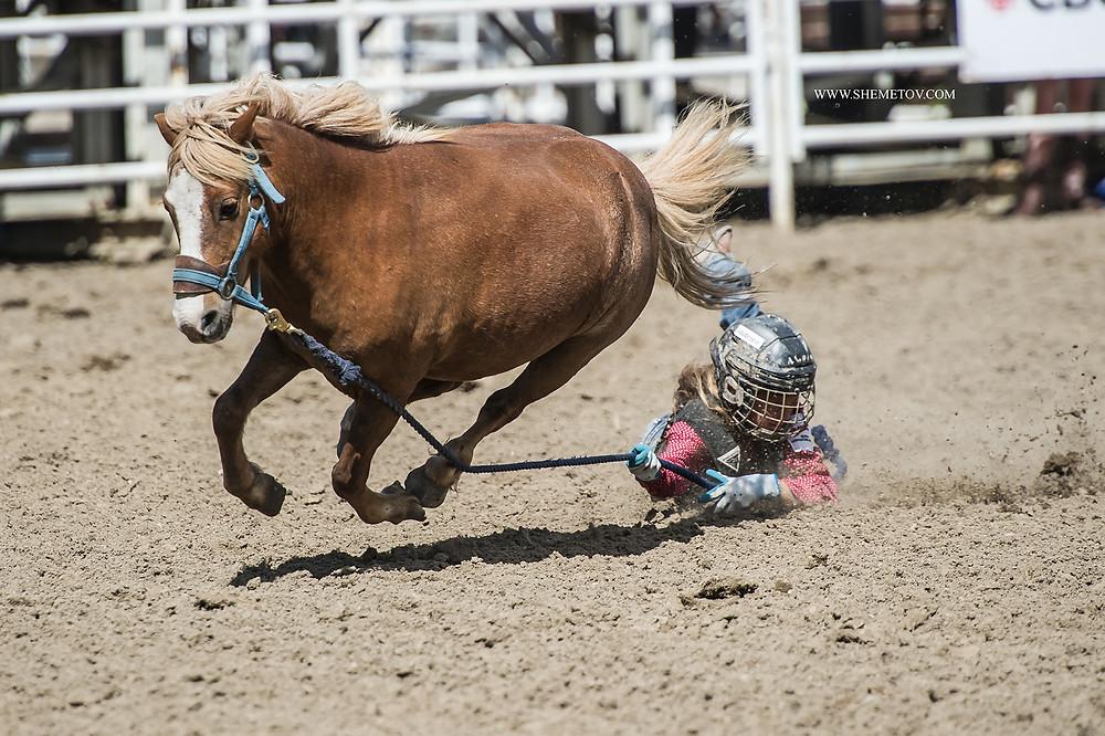 Calgary Stampede. Kids rodeo