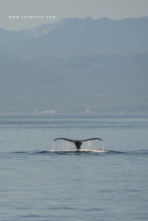Whale`s tale