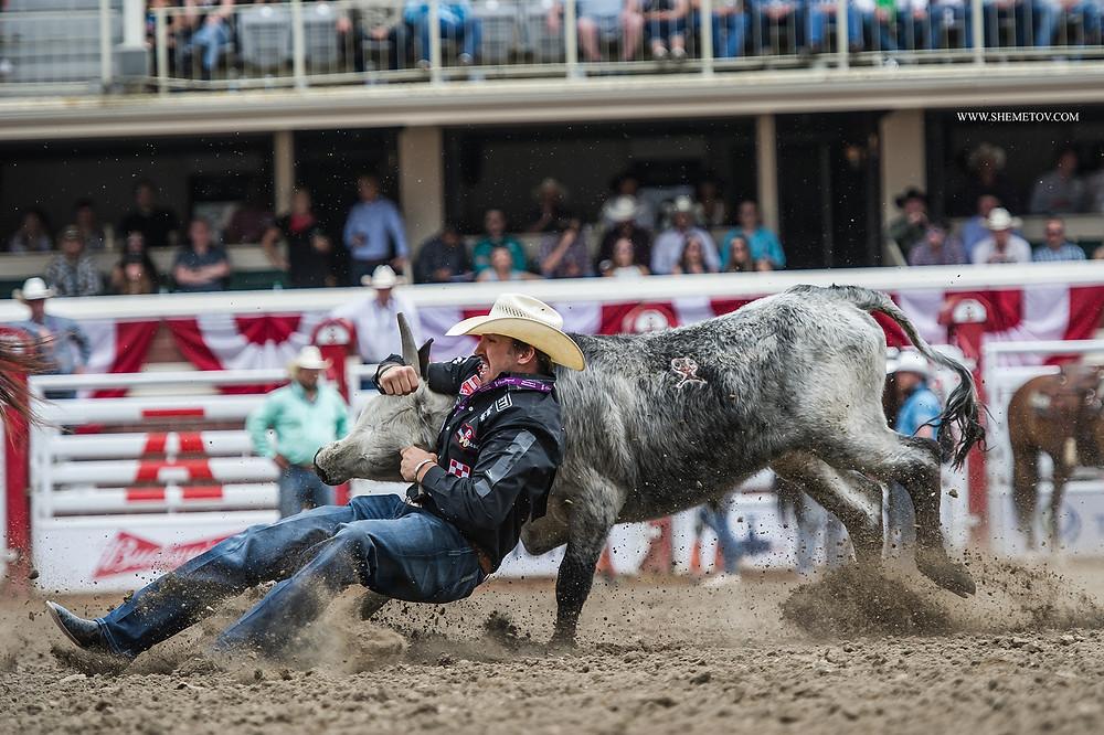 Calgary Stampede 2019. Bull wrestling