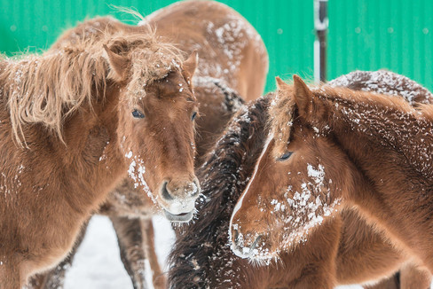 Russia, country side, horse, winter, snow, cold, Ural Region.jpg