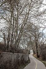 Calgary, Alberta, Canada, road, bike path, autemn, trees, fence, coldish.jpg