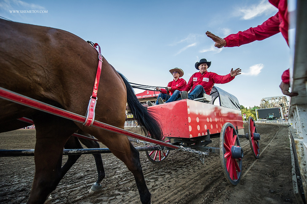 Calgary Stampede Rodeo. Chuck-wagon Racing