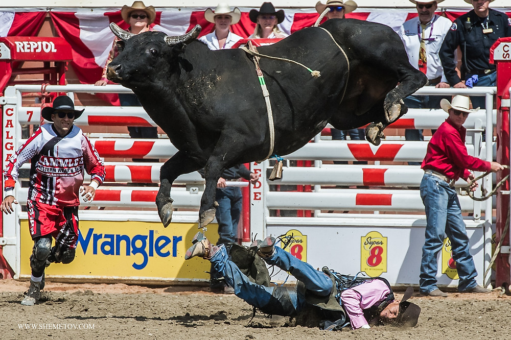Calgary Stampede Rodeo. Bull Riding