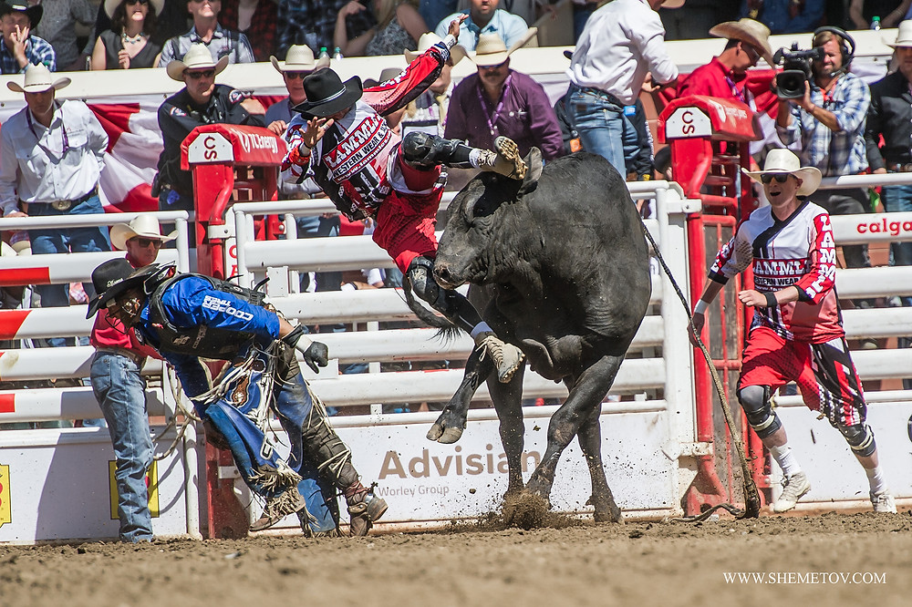 Calgary Stampede. Bull riding