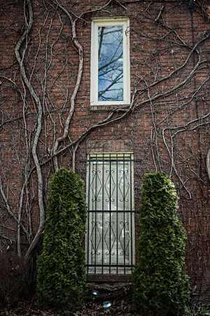 Toronto, Ontario. Canada, ON, Downtown, wall, trees, green, windows..jpg