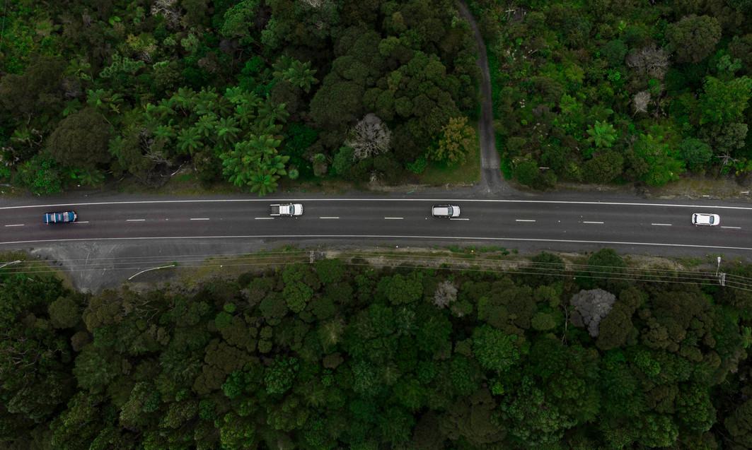 RoadTrees (1 of 1).jpg