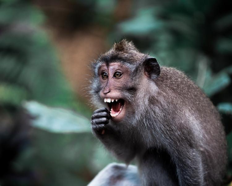 monkeyubudsmile.jpg