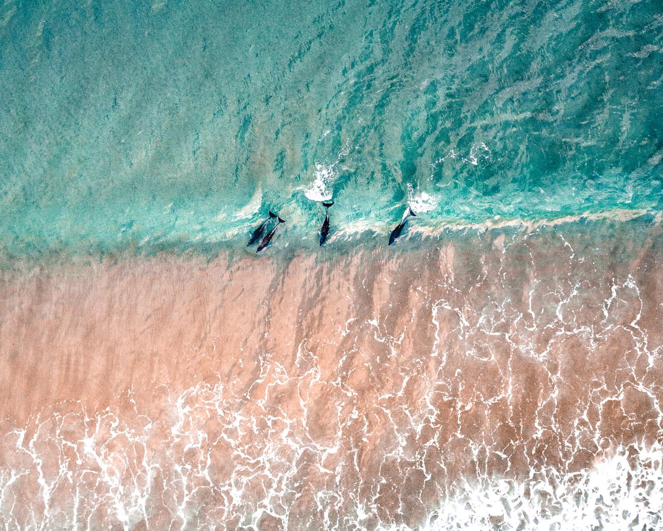 dolphinsswimming.jpg