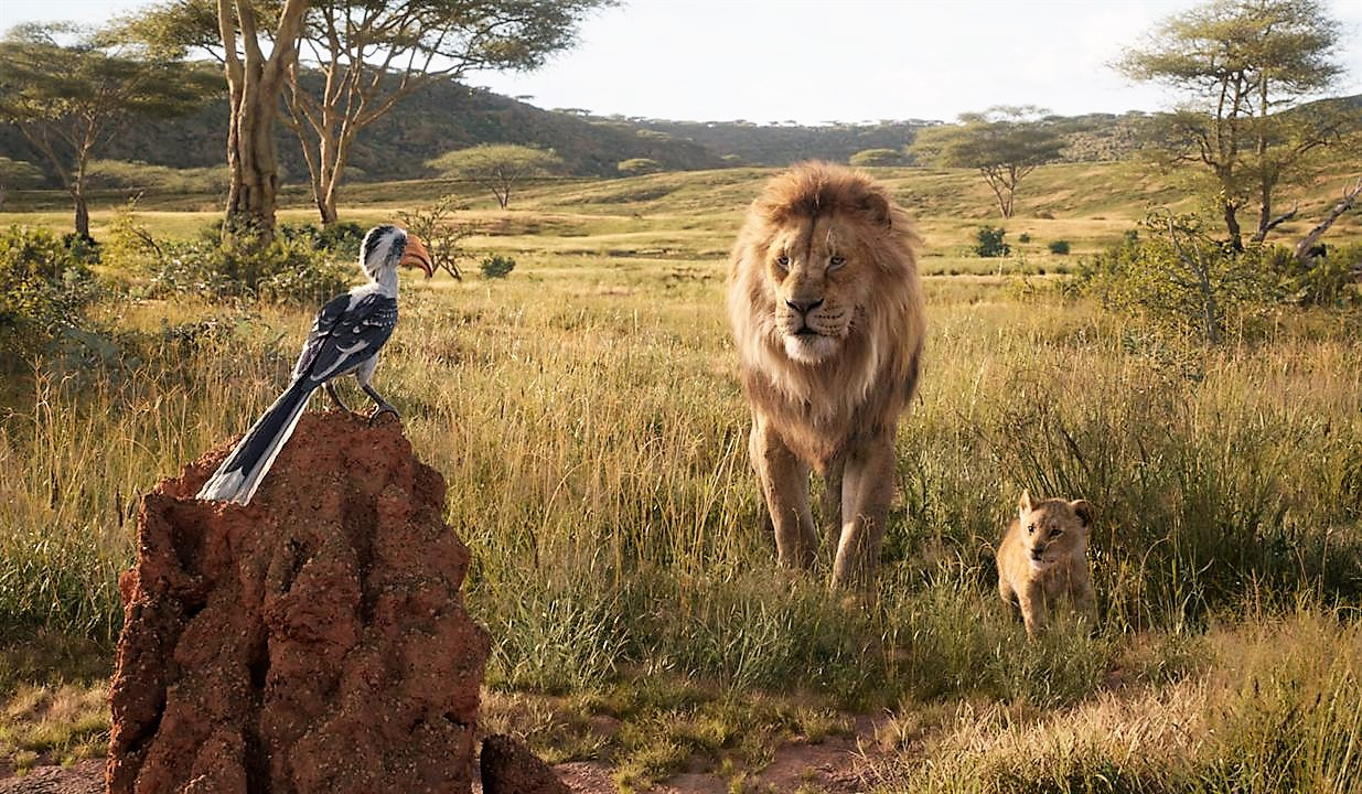 le-roi-lion-live-190jpg