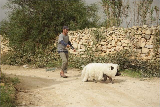 le-cochon-de-gaza-120jpg