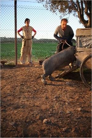 le-cochon-de-gaza-170jpg