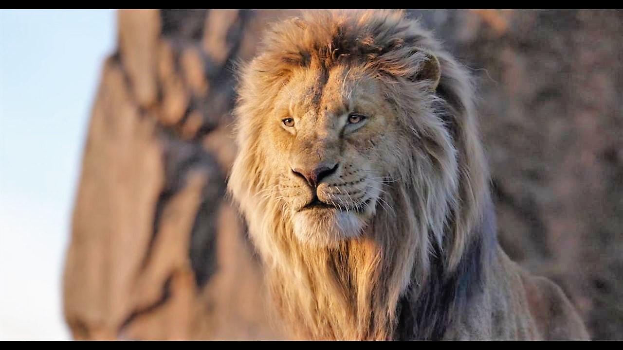 le-roi-lion-live-160jpg