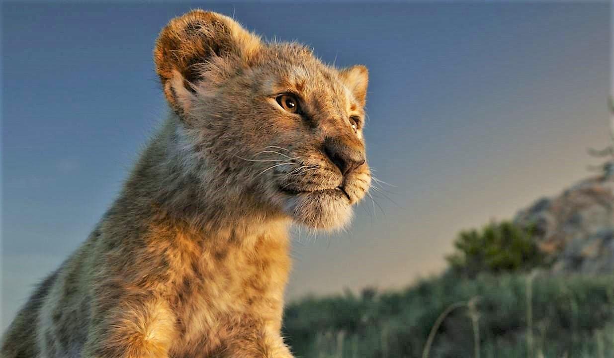 le-roi-lion-live-240jpg