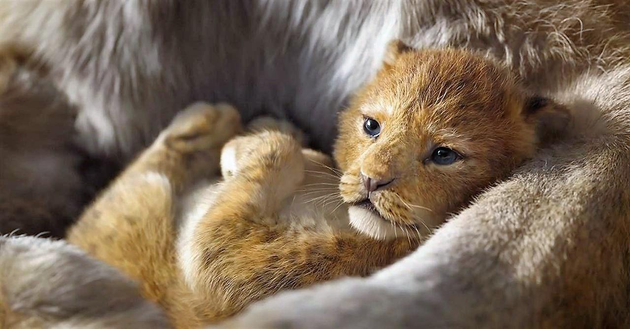 le-roi-lion-live-140jpg