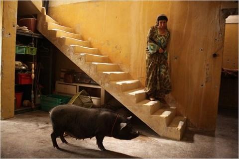 le-cochon-de-gaza-190jpg