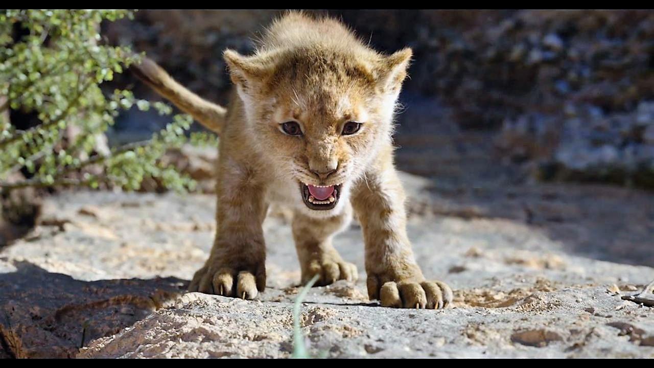 le-roi-lion-live-180jpg