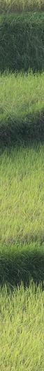 le-promeneur-d-oiseau-200jpg