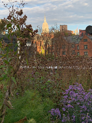 View from the High Line in Chelsea, New York City