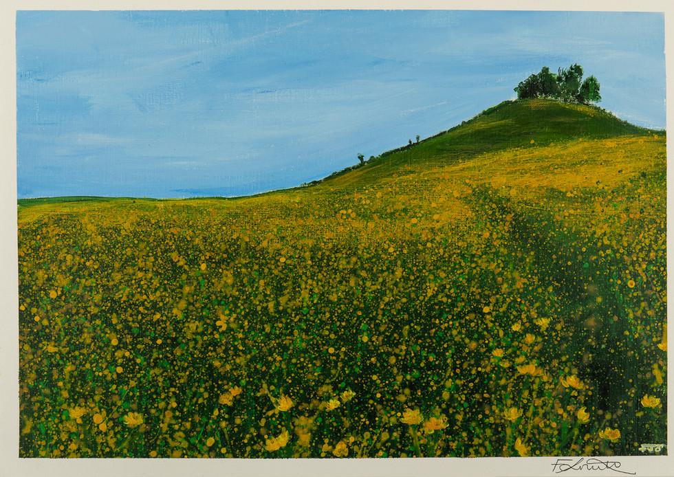 Kelston Roundhill Buttercups