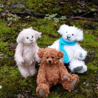 Timmybjørner