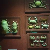 Turma GA 2017 Visita Museu Oceanográfico