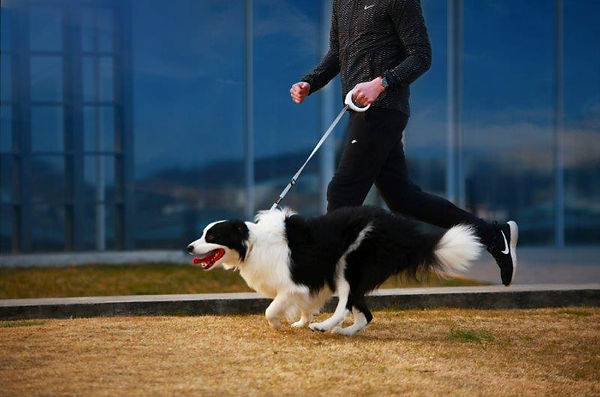 PETKIT GO ペットキット 犬 健康