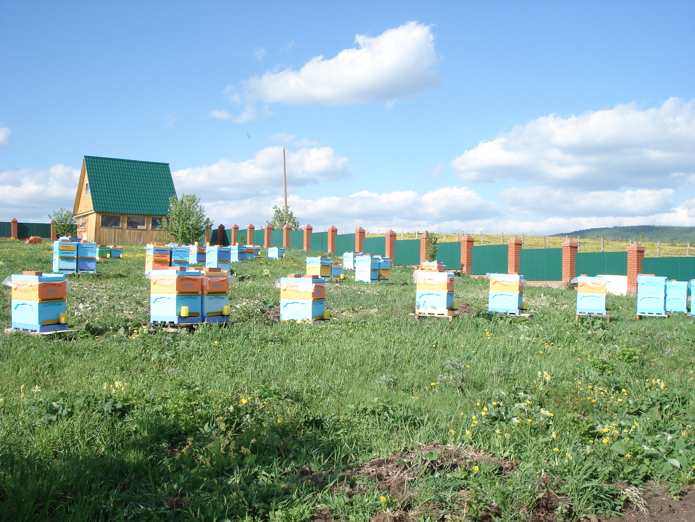 Натуральный мёд башкирский мед пасека эко продукты качественный органический апитерапия