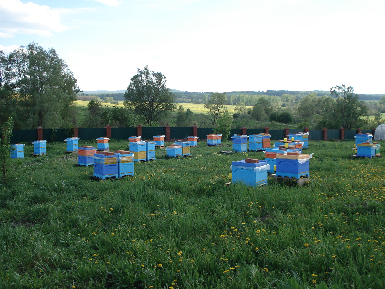 Натуральный мёд башкирский мед пасека эко продукты качественный органический апитерапия природа