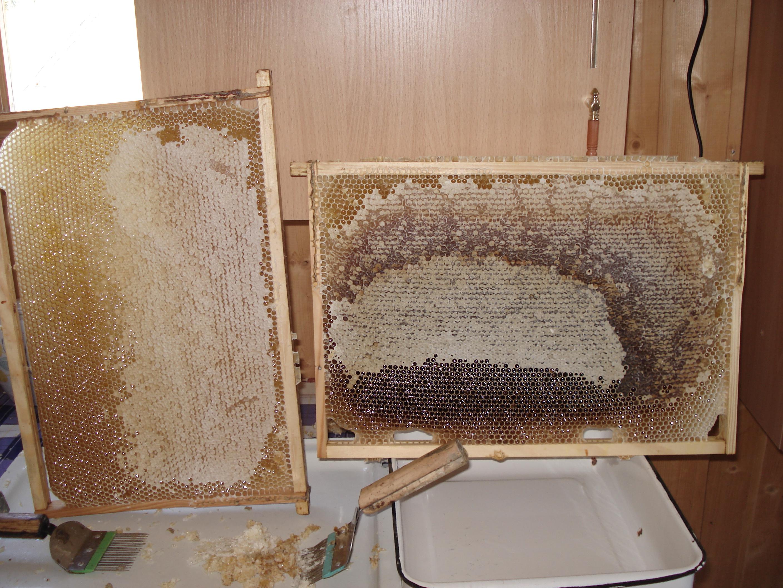 Натуральный мёд башкирский мед пасека эко продукты качественный органический апитерапия пчелы в рамк