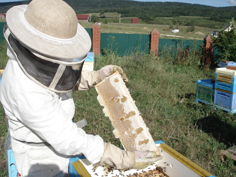 Натуральный мёд башкирский мед пасека эко продукты качественный органический апитерапия пчеловодство