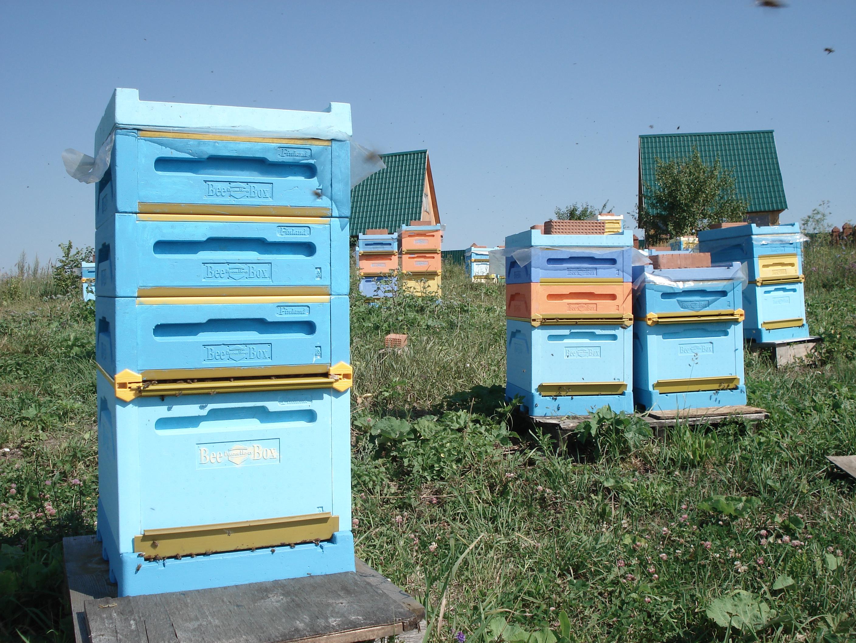 Натуральный мёд башкирский мед пасека эко продукты качественный органический апитерапия пчелы полезн