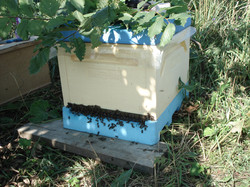 Натуральный мёд башкирский мед пасека эко продукты качественный органический апитерапия пчелы рой