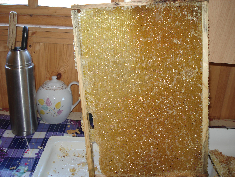 Натуральный мёд башкирский мед пасека эко продукты качественный органический апитерапия пчелы сотовы