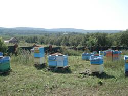 Натуральный мёд башкирский мед пасека эко продукты качественный органический апитерапия пчелы эколог
