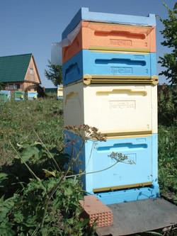 Натуральный мёд башкирский мед пасека эко продукты качественный органический апитерапия пчелы улей