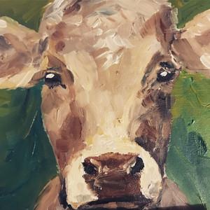 Pidemontese cattle
