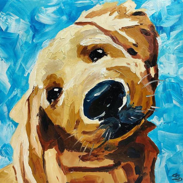 Spotty the dog