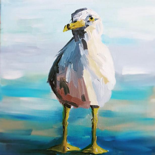 Seagull of Dublin Bay