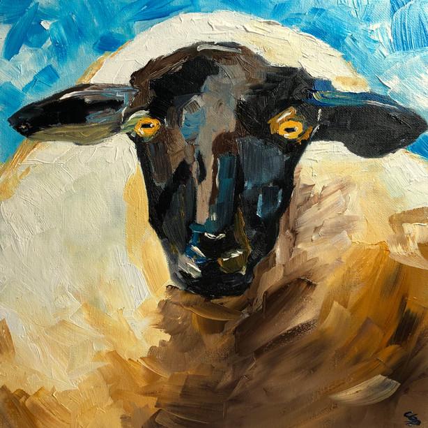 An Irish Lamb