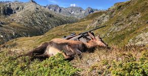 Catture totali caccia alta 2020
