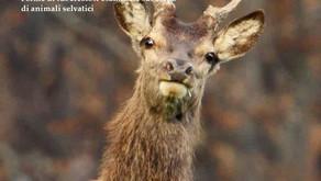 Manuale sulla tubercolosi nella fauna selvatica