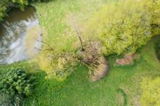 Photo aérienne Arbre