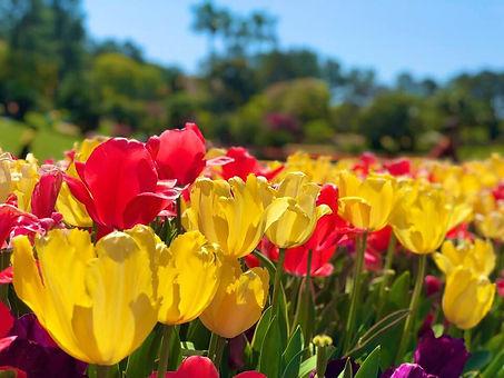 flower_07.jpg