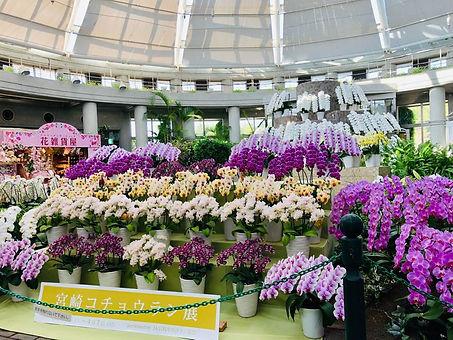 flower_13.jpg