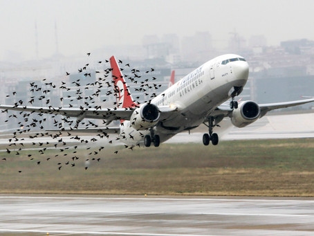 It's a Wildlife in Canadian Aviation