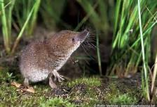 Muisjes.....geen beschuit met muisjes!