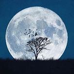 Moondrop