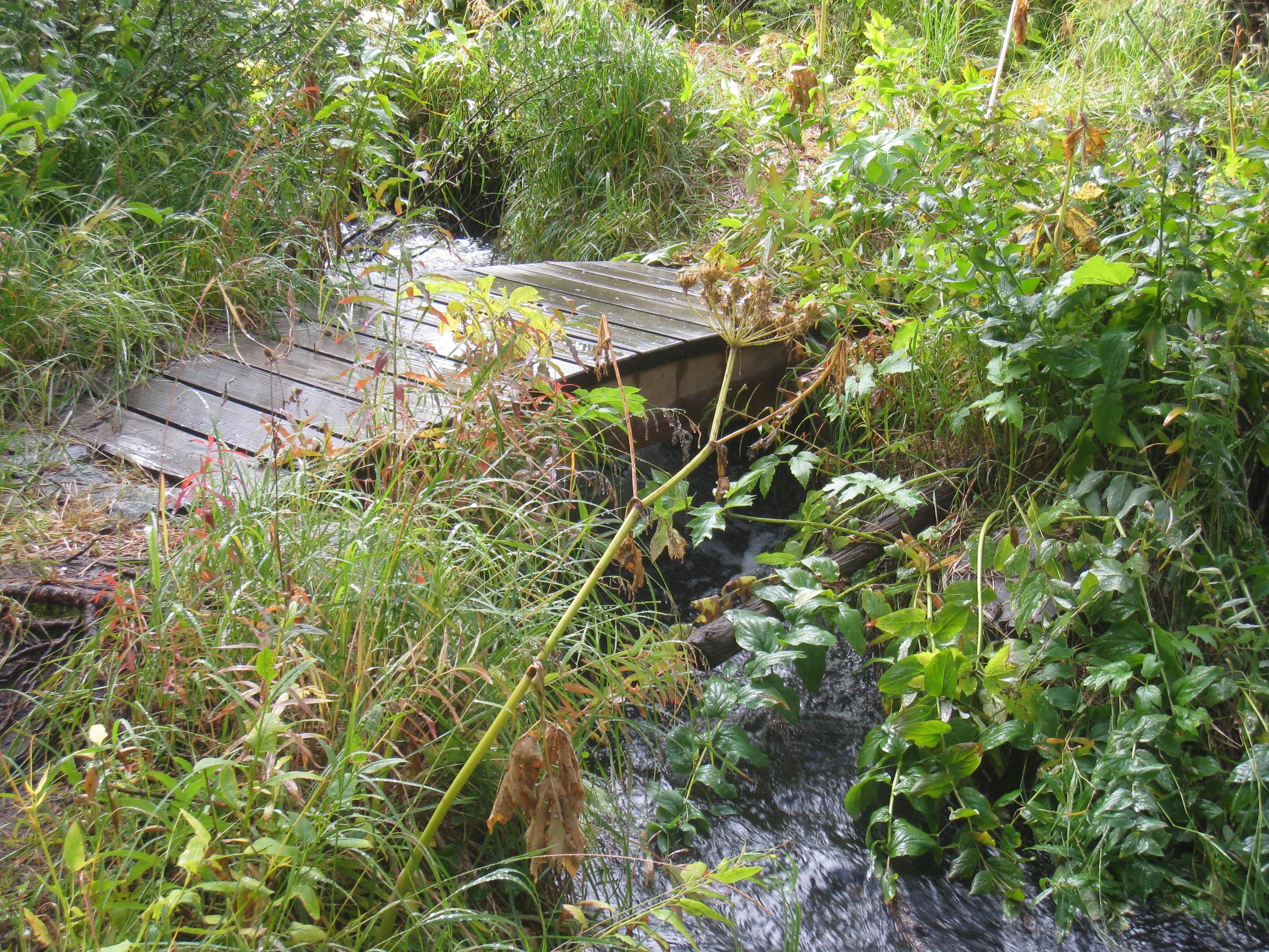 Footbridge Across Creek