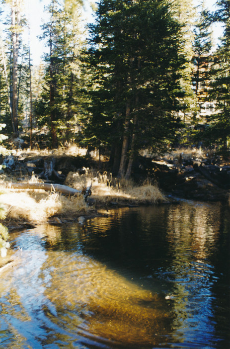 Trout Pond near the Cabin